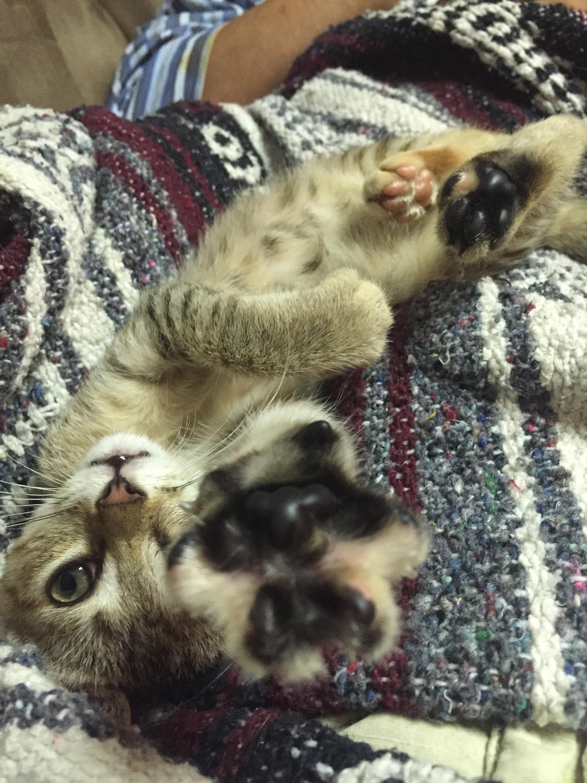 Kitten Hammock Amazingly 72