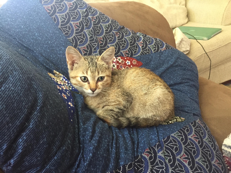 Kitten Hammock Amazingly 40